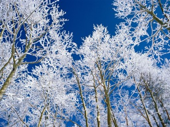 1264703461_an_everclear_afternoon_snow_covered_trees